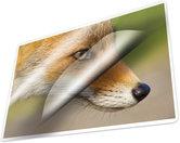 Kangaro-K-16003-Lamineerhoes-125-Micron-100-Vel-83x113mm
